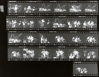 Grateful Dead and the Neville Brothers: contact sheet with 25 images