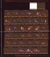 Grateful Dead at the Carrier Dome: contact sheet with 36 images