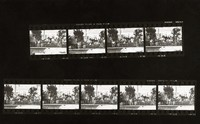 "Grateful Dead at ""A Day On The Green #8"": contact sheet with 9 images"