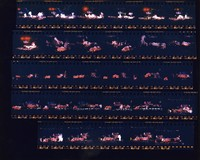 Grateful Dead: Chinese New Year concert at the San Francisco Civic Center: contact sheet with 29 images