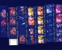 "Grateful Dead: ""Dead Images"" 1995 #6: contact sheet with 25 images"